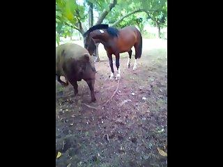 20.horse Fucking Pig